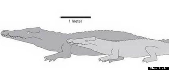 LARGEST CROCODILE