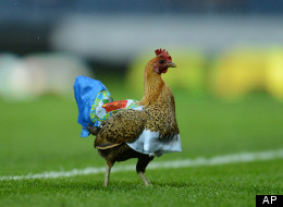 Blackburn Chicken