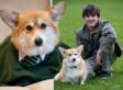 Asperger's Syndrome Teenager Nick Gilling Has New Lease Of Life Thanks To Corgi Dog Sally