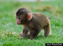 LOOK: Adorable Snow Monkey Babies!