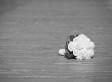 Estrella Carrera Found Dead In Bathtub, Still In Wedding Dress From Recent Nuptials