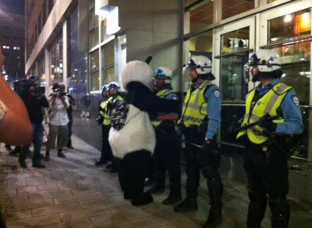 panda greve etudiante