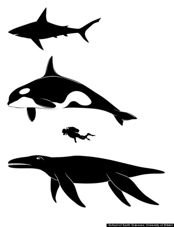 pliosaur size