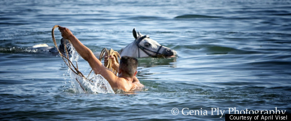 HORSE RUNS INTO SEA