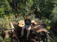 Vancouver Island Red Cedar: 800-Year-Old Tree Hacked Down, Says Environmental Group (PHOTOS)