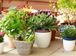 Container Gardening Tips: How To Tend A No-Yard Garden