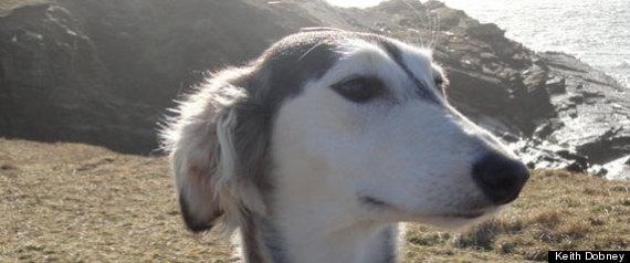 DOG ORIGIN