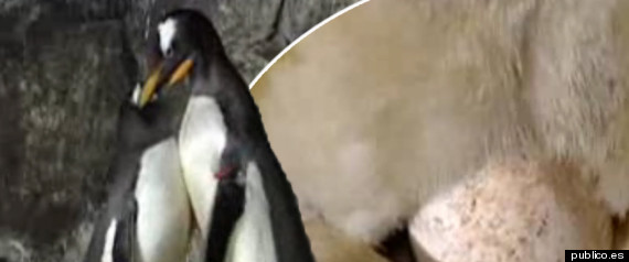 GAY PENGUIN
