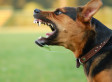 Aggressive Dogs Favored By Disagreeable Owners, Study Shows