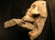 'Vampire' Plague Victim: Remains Found In 16th Century Venice Grave Spur Scientific Debate