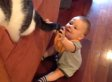 Baby Mesmerized By Cat's Tail (VIDEO)