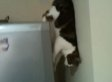 Spider Cat Climbs Down The Refrigerator (VIDEO)