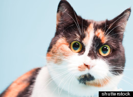 WHEN CATS GO BAD: Take Our Kitties And Crime Quiz!