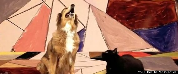 DOG CAT GOTYE PARODY