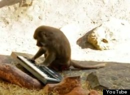 Monkey And Synth