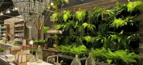 Garden Wall Ideas: When Plants Become Interior Decor (