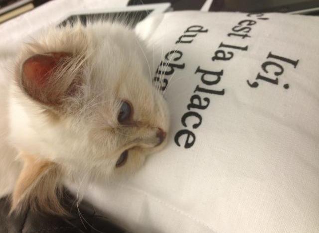 choupette karl lagerfeld cat
