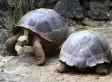 Turtle Divorce: Giant Turtles Divorce After 115 Years Together