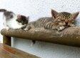 Cute Sleeping Kitten Naps Through Playtime (VIDEO)