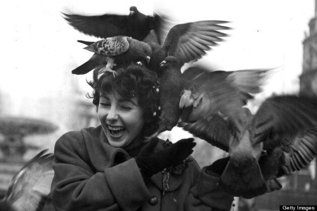elizabeth taylor pigeon
