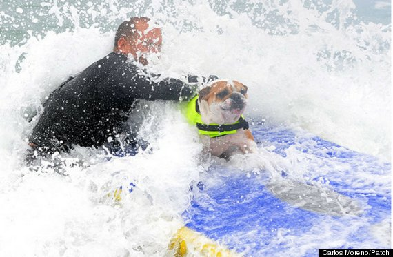 splash dog surfing