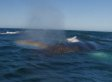 Whale Shoots Rainbow Out Of Blowhole (VIDEO)