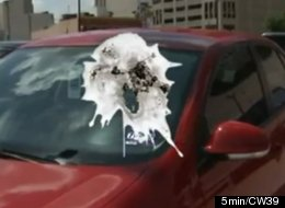 Image result for bird pooping on cars and people