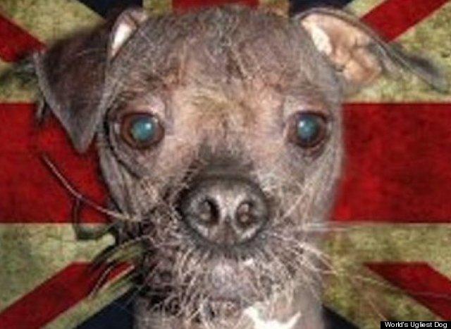 Bloodshot Eyes In Dogs Uk