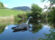 Louisiana Private Schools Teach Loch Ness Monster Is Real In Effort To Disprove Evolution Theory