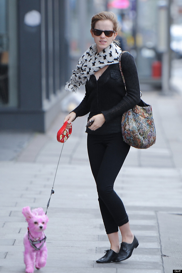 Celebrities Walking Their Dogs