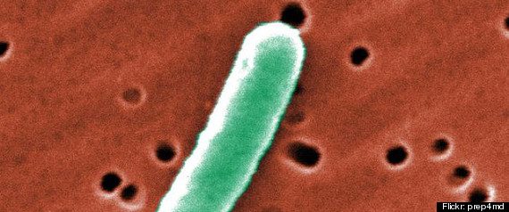 E COLI OUTBREAK CDC