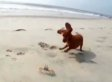 Puppy Makes Friends With A Crab On The Beach In South Carolina (VIDEO)