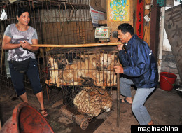 Dog Meat Industry China