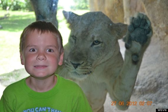 zoo miami lion kid photo