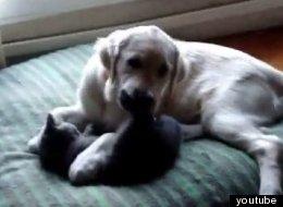 Подборка смешных кошек и собак — смотрите забавные