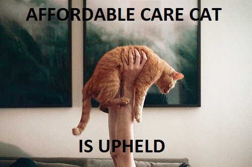 affordablecarecattumblr