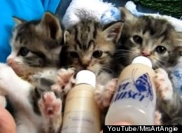 WATCH: Kittens Sip Bottles In Adorable Video