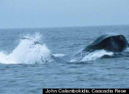 Blue Whales California