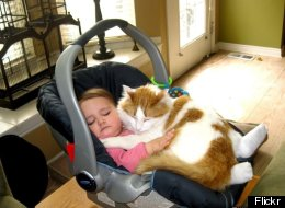 Cat Carseat