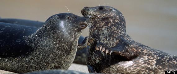 SEALS SAN DIEGO