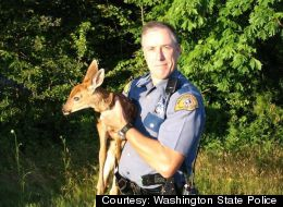 How'd This Baby Deer End Up In This State Trooper's Car