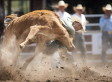 Calgary Stampede Met With Protest Over Rodeo After Chuckwagon Horse Deaths