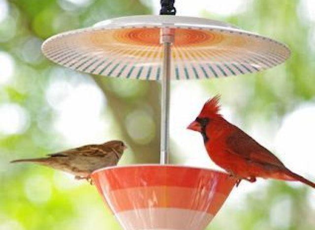 craft of the day bird feeder 1