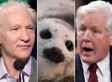 Bob Rae: Bill Maher Should Stop Singling Out Seal Hunt