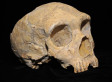 Neanderthals May Have Had Vegetable-Heavy Diet, Study Suggests