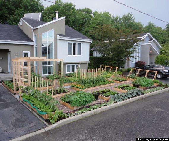 front yard garden. illegal kitchen garden Illegal Front Yard Garden  Canadian Couple s Kitchen