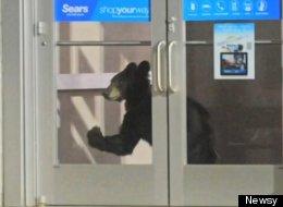 Bear Mall