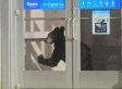 Bear Enters Mall Through Automatic Doors In Pennsylvania (VIDEO)