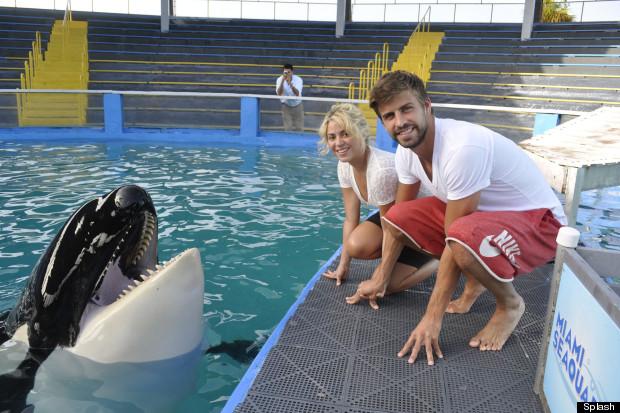 shakira miami killer whale