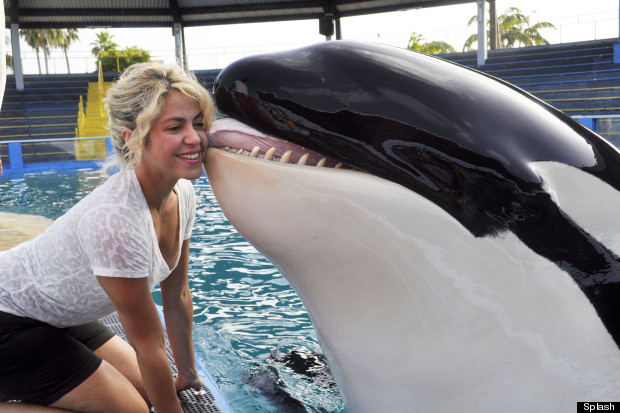 shakira killer whale miami